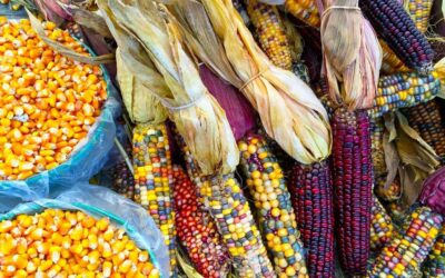 Food Sovereignty in the Age of a Pandemic